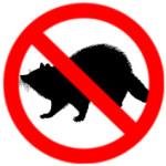 Raccoon Removal Cambridge